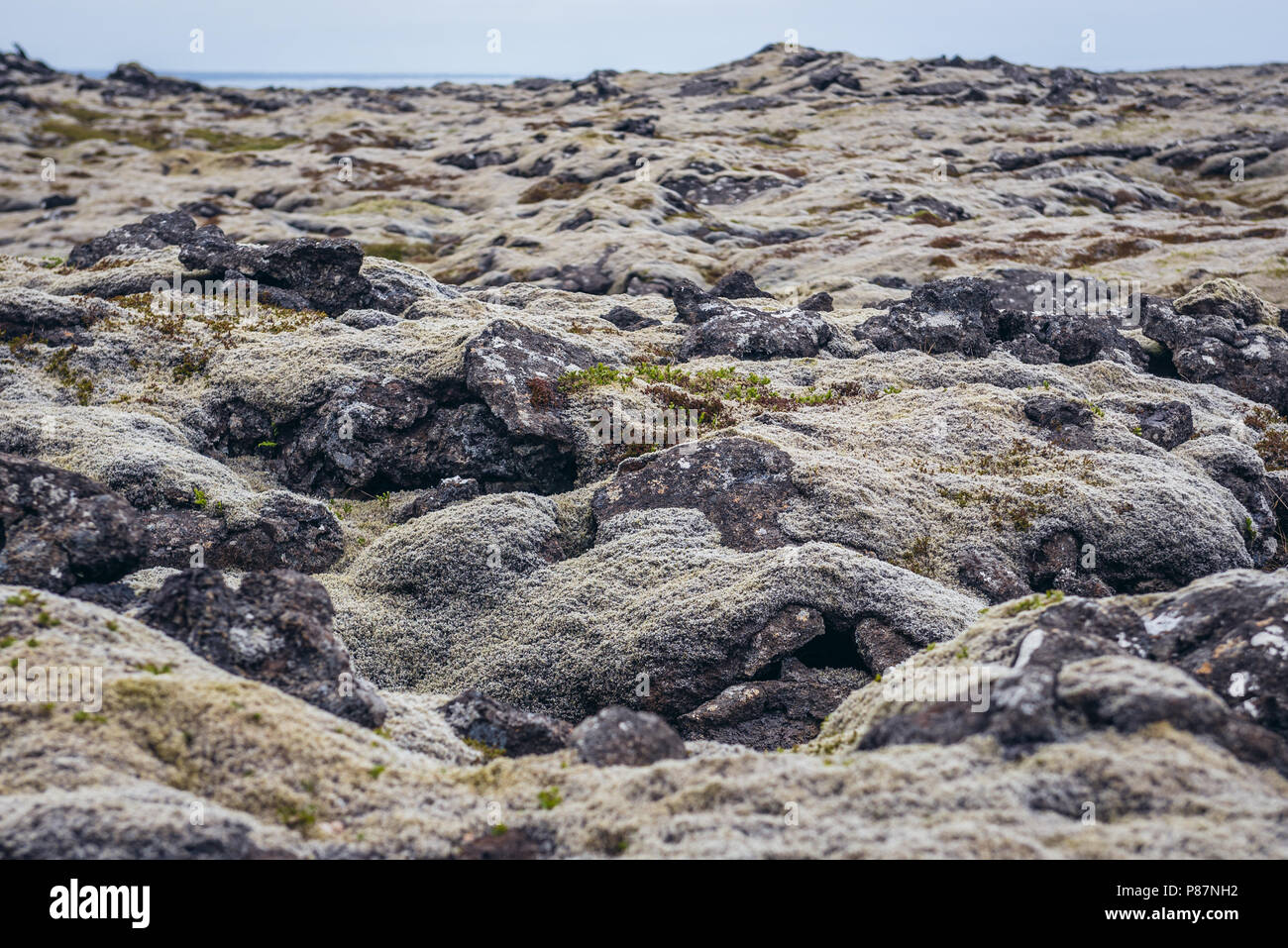 Lava field covered with moss on a Reykjanesskagi - Southern Peninsula in Southwest Iceland - Stock Image
