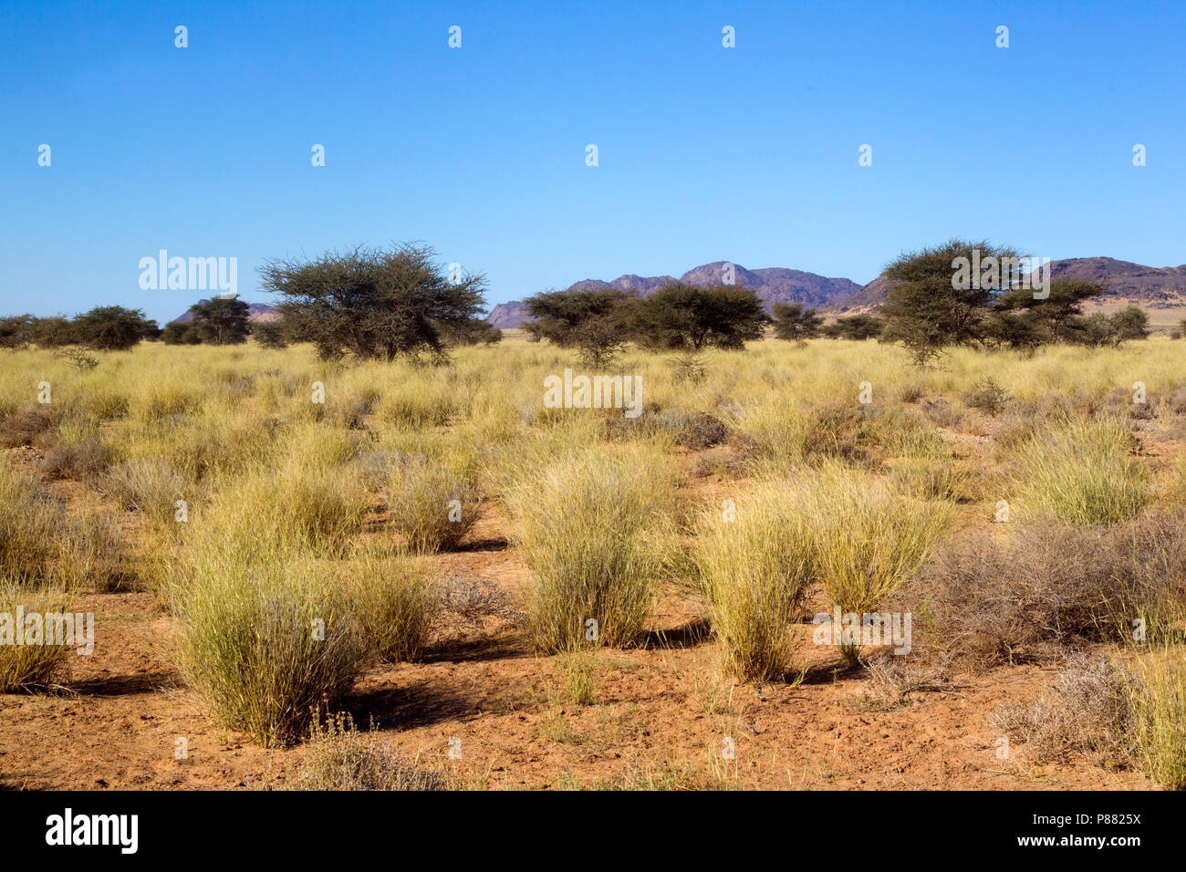Landschap, Oued Jenna, Aousserd, Landscape, Oued Jenna, Aousserd - Stock Image