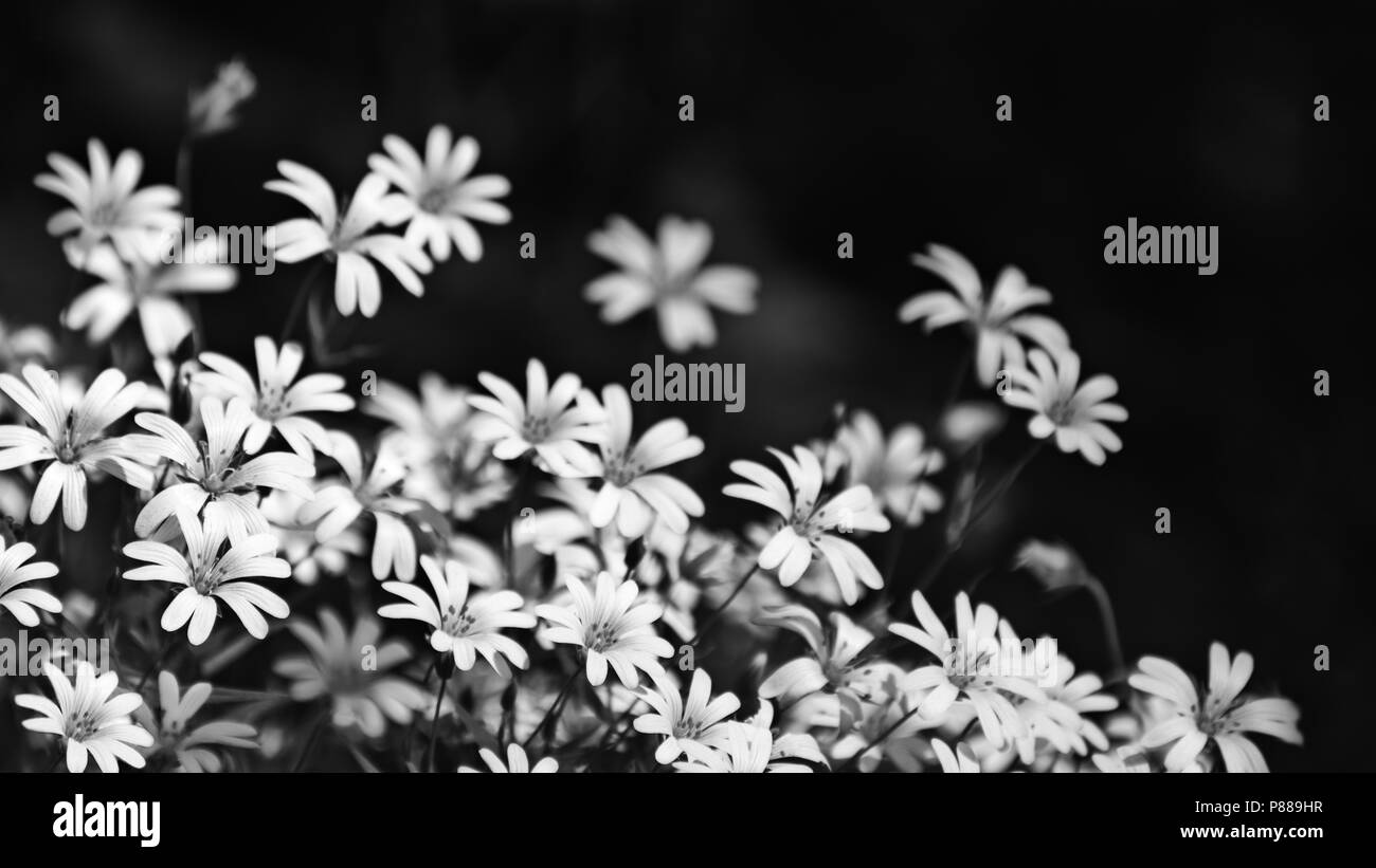Black And White Floral Abstract Stock Photos Black And White