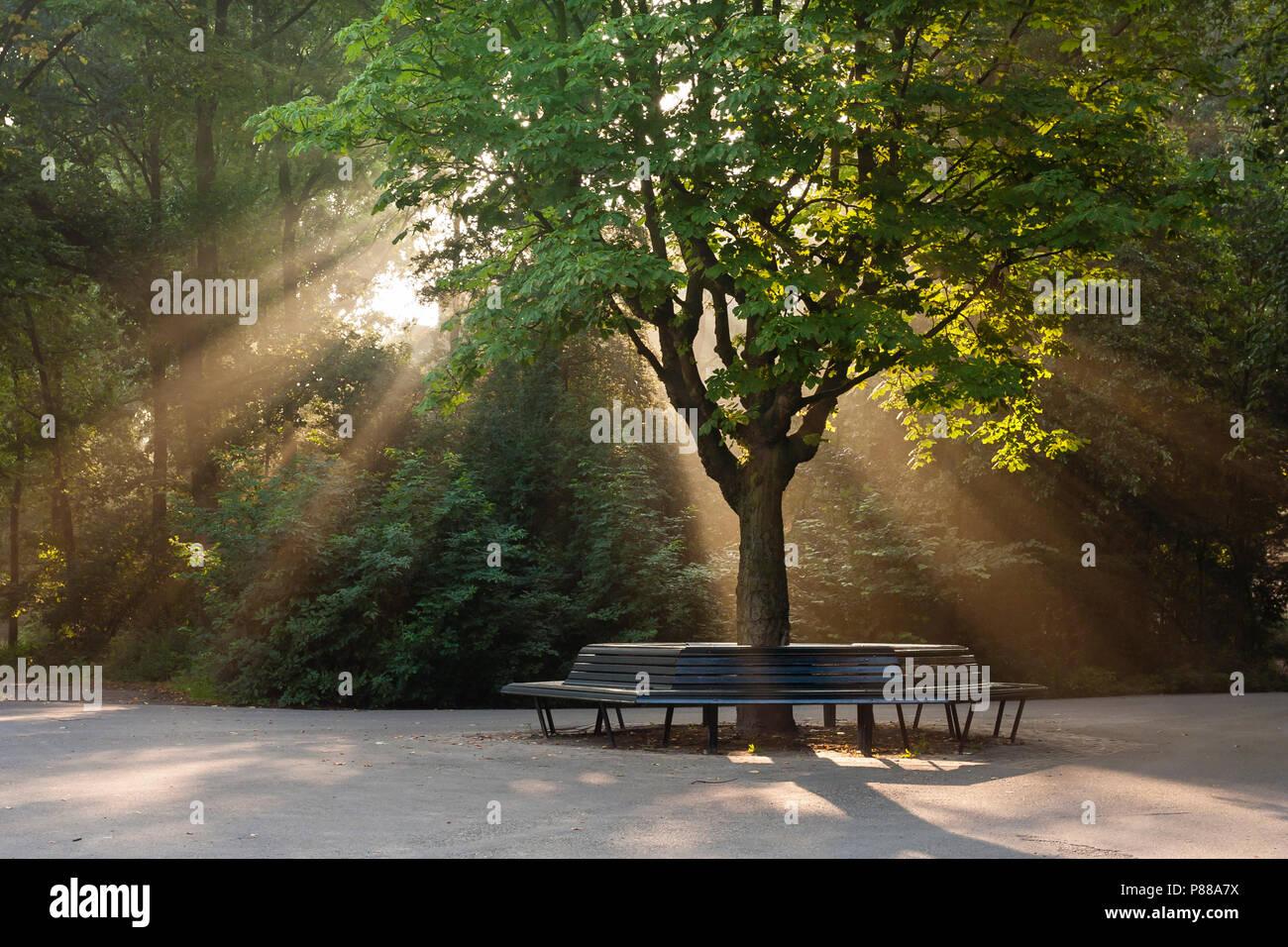 Zonneharp in park in de zomer; Solar Harp in park in summer - Stock Image