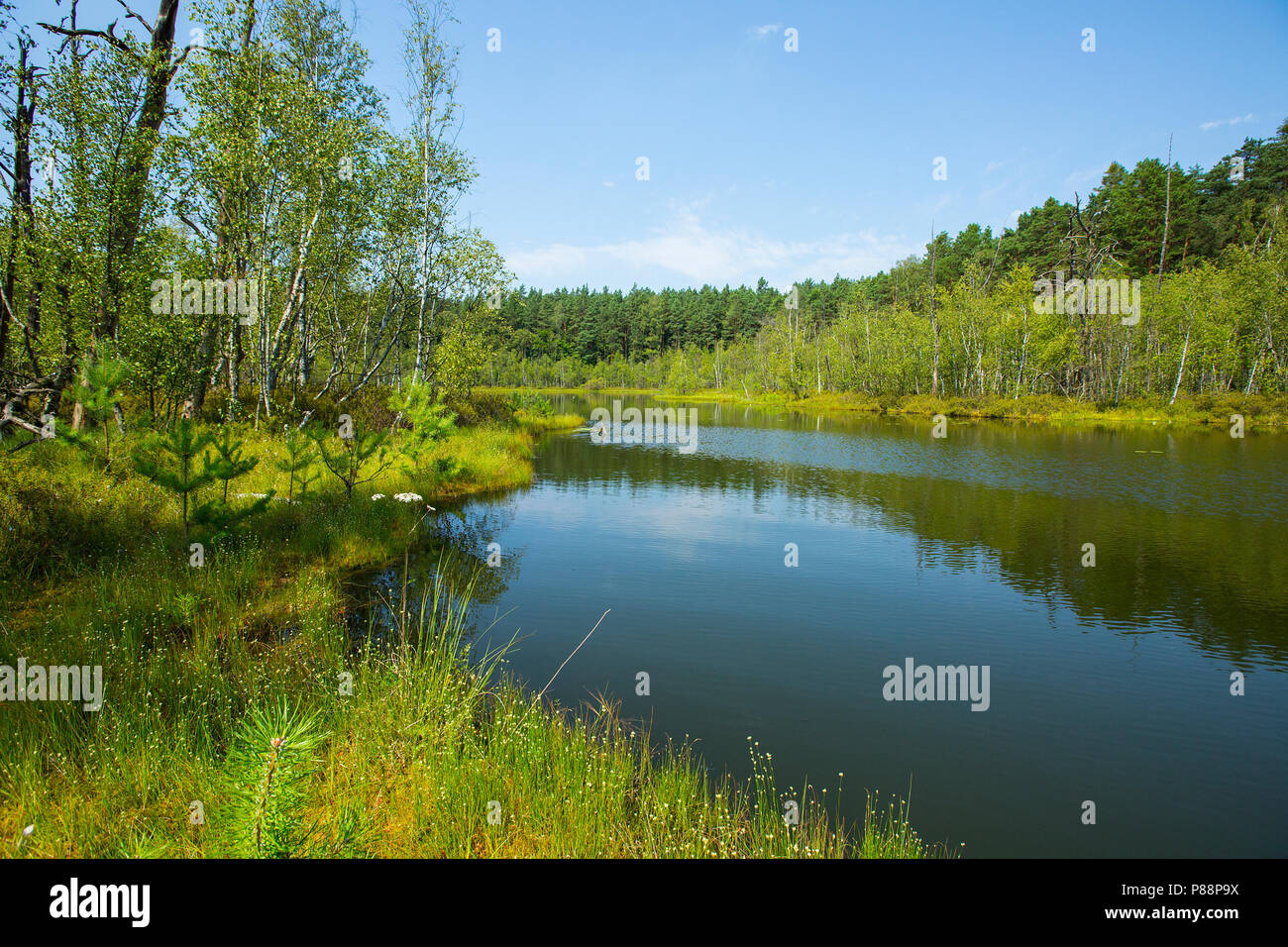 Vennen omgeving van Rheinsberg, Fens near Rheinsberg Stock Photo