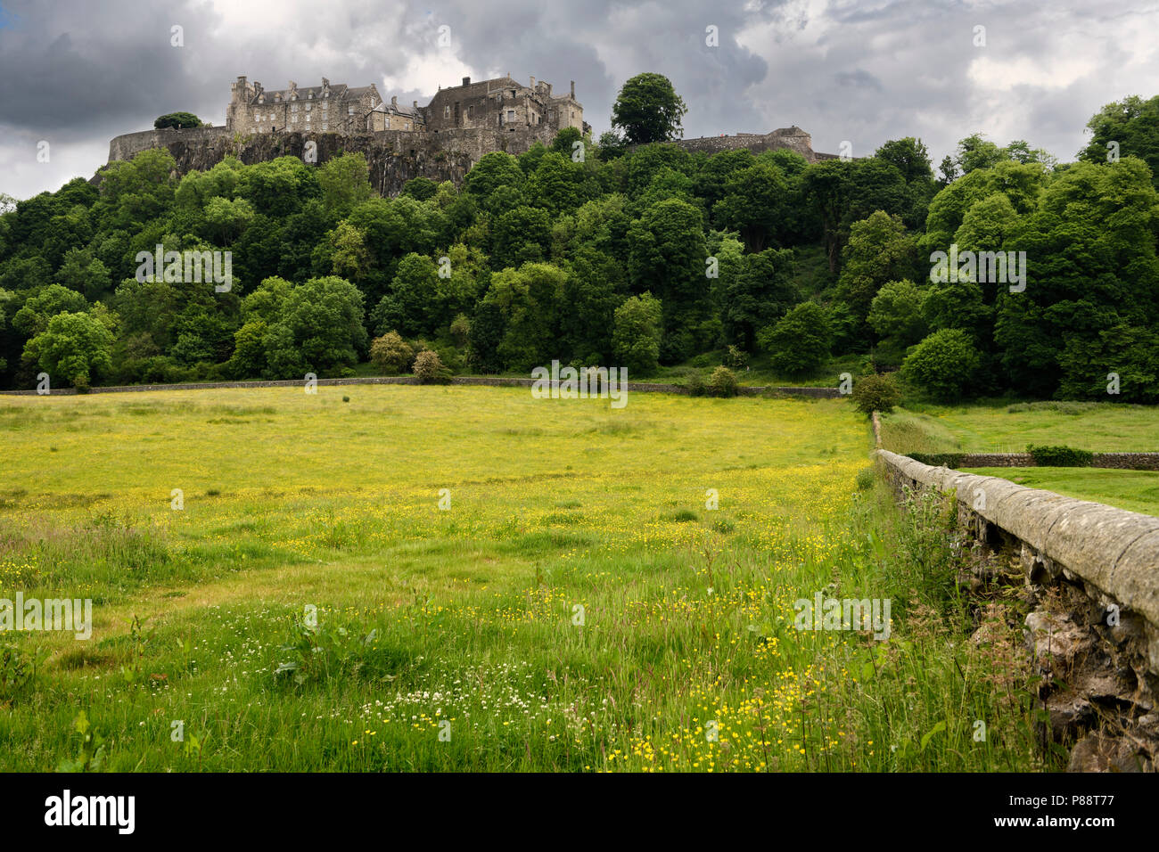 Stirling Castle high on Castle Hill with clouds and yellow buttercups in sheep pasture with stone wall in Stirling Scotland UK - Stock Image