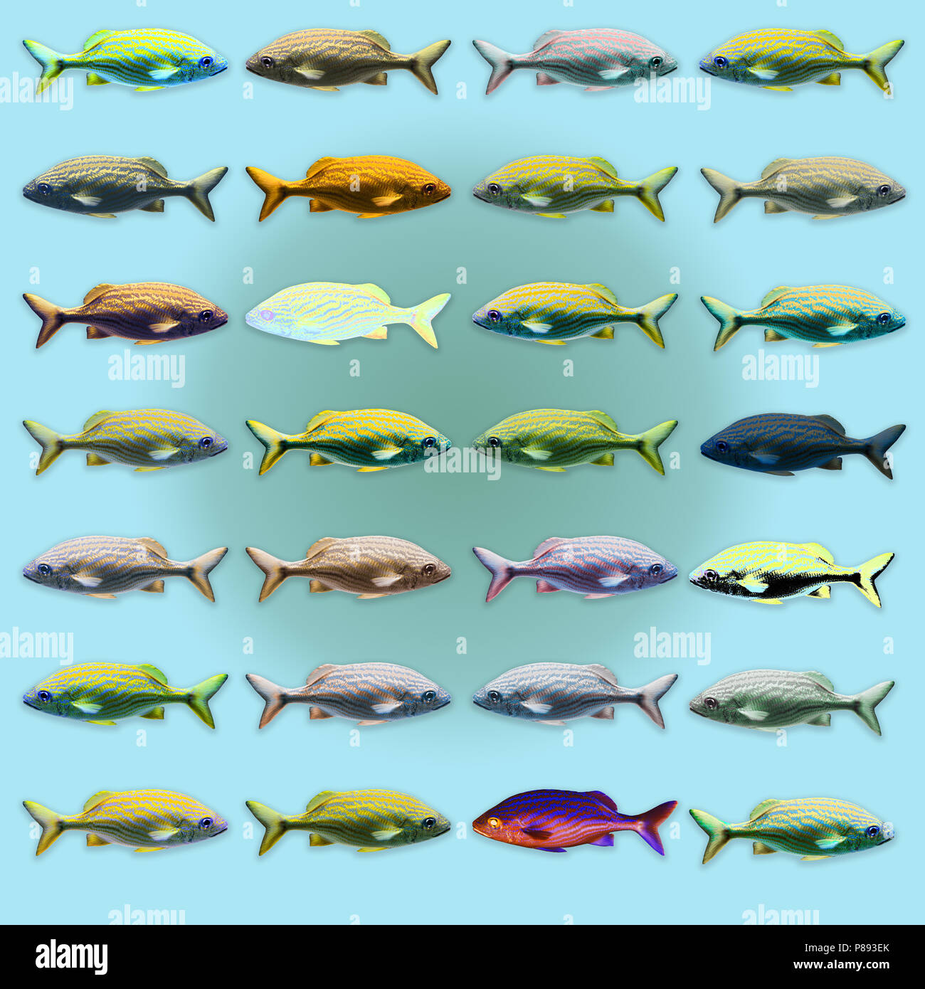 Digitally enhanced image of 28 color variations of a sea fish - Stock Image
