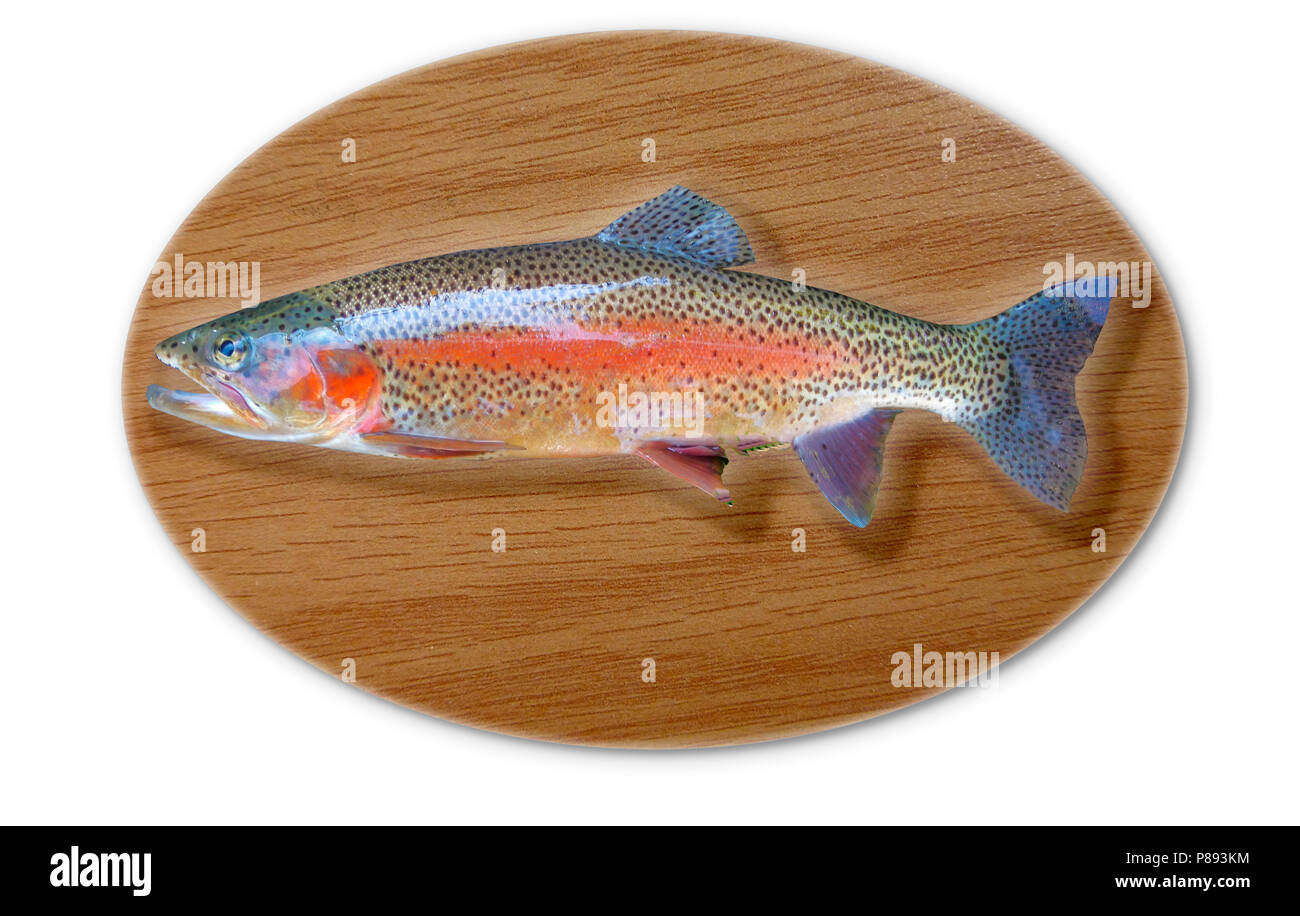 Digitally generated image of a mounted trout trophy on a wooden plaque - Stock Image