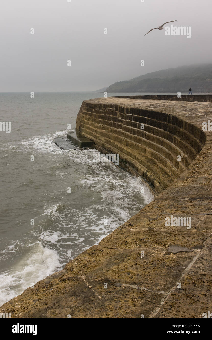 Stormy misty weather in Lyme Regis, Man walking and seagull flying into winds with waves crashing against the Cobb Harbour, Dorset, England, Europe. Stock Photo