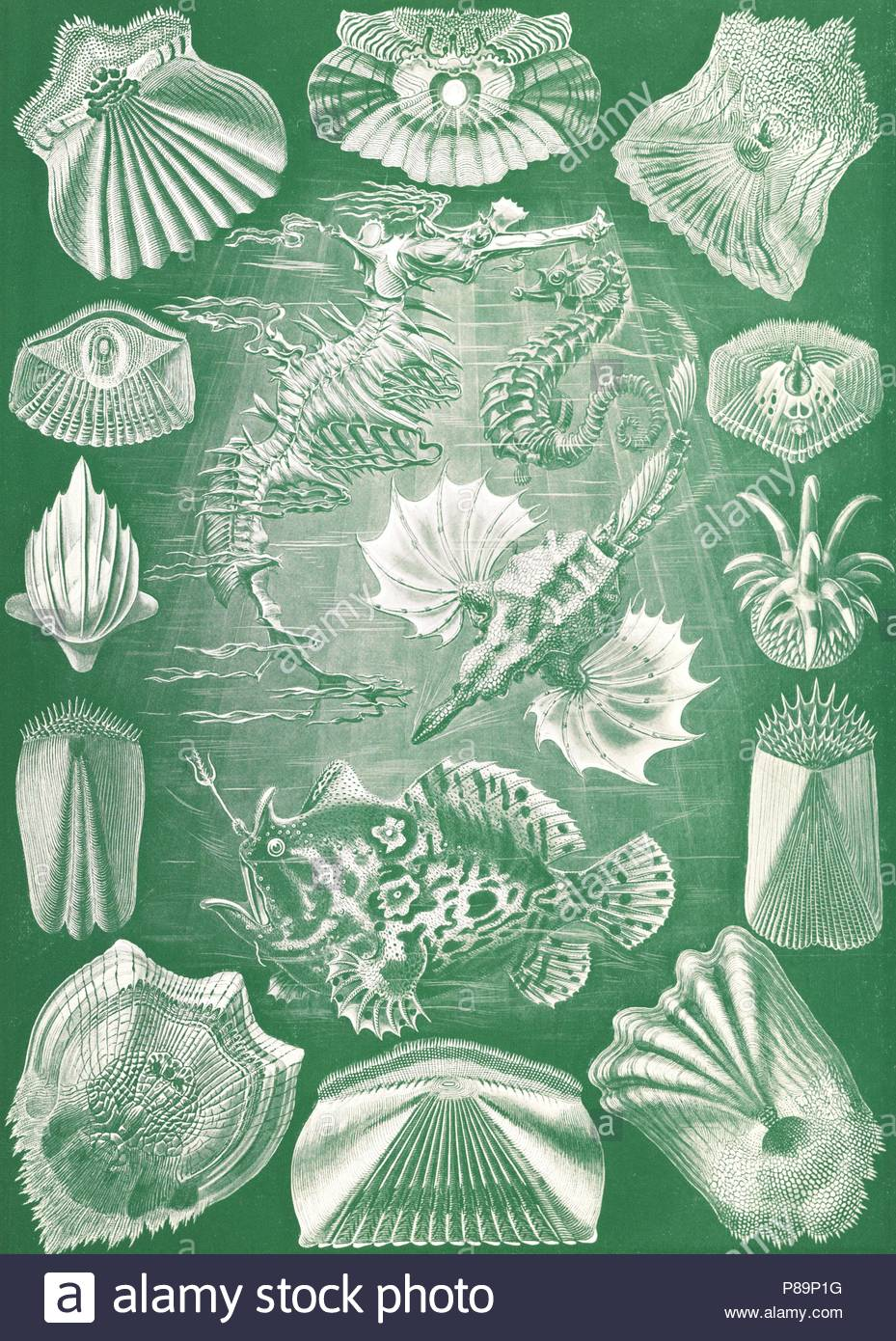 Illustration shows fish. Teleostei. - Knochenfische, 1 print : color ...