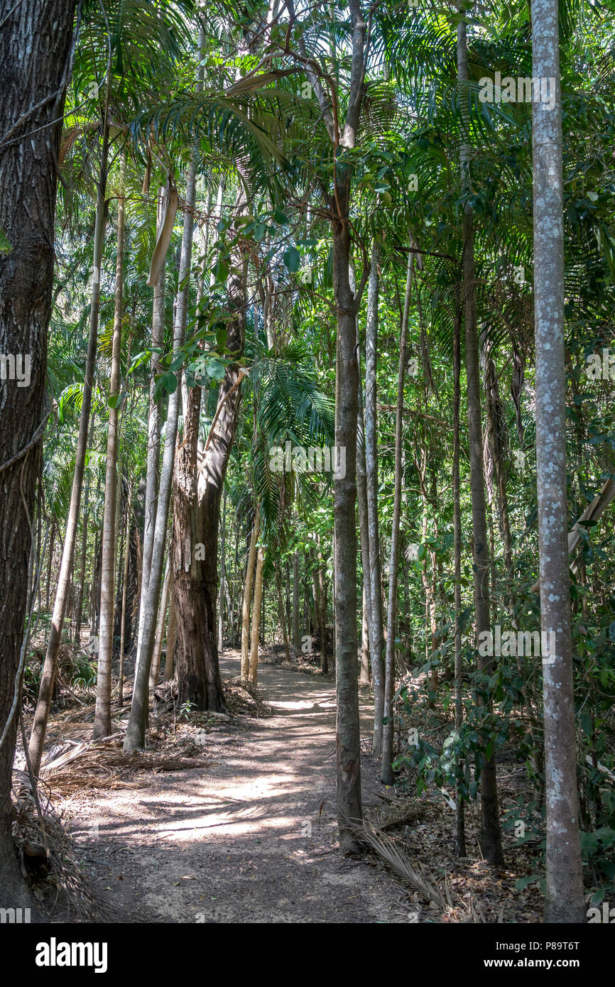 Monsoon Forest at Howard Springs Nature Reserve, Darwin, Australia Stock Photo