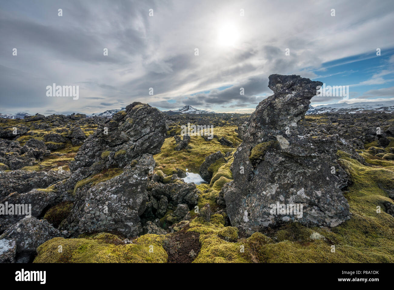 Moss-covered lava field, lava rock, lava field of the volcano Kothraunskula, Snaefellsnes Peninsula, West Iceland, Iceland - Stock Image