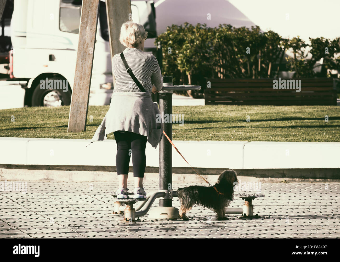Elderly woman walking dog using outdoor exercise machine on city street in Spain - Stock Image