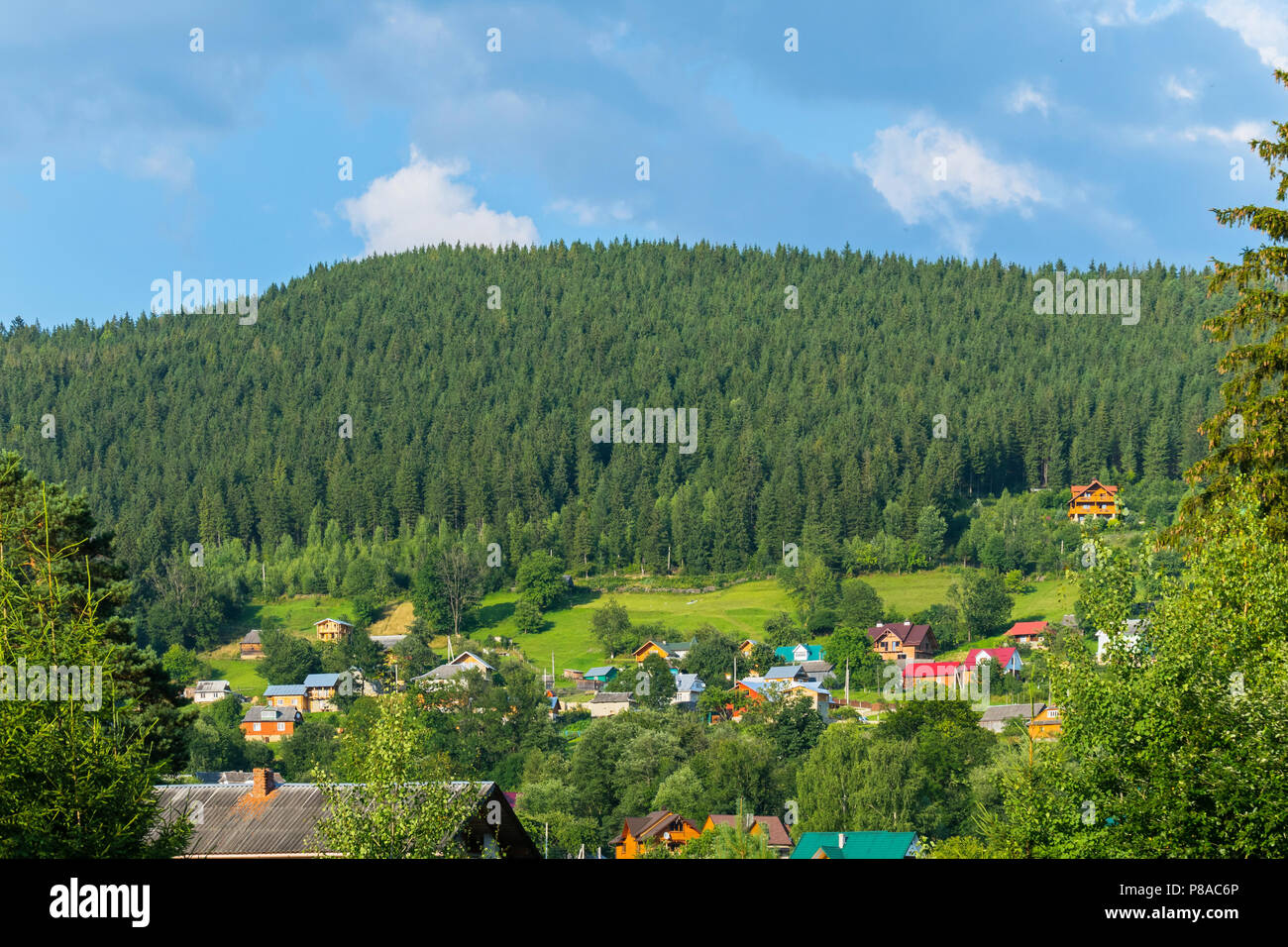 dense spruce forest on a hill near a Carpathian village with colored roofs . For your design - Stock Image