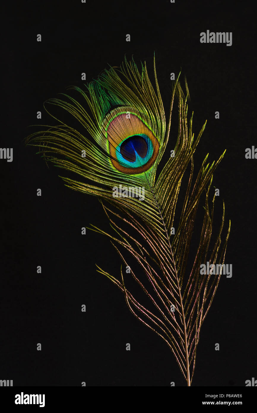 close up of a feather of a peacock wonderful plume object full of