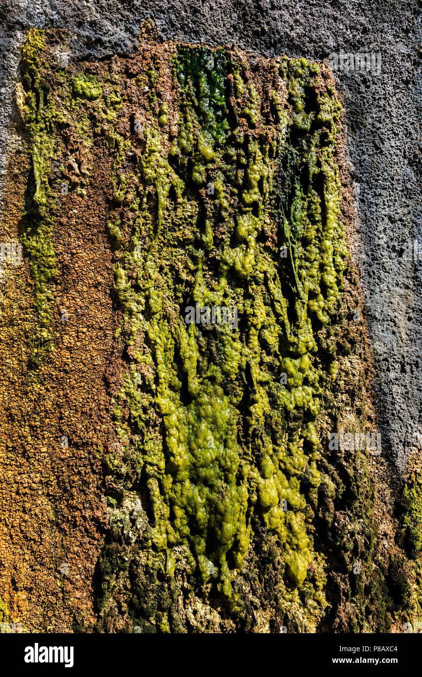 Green Algae on Rocks. - Stock Image