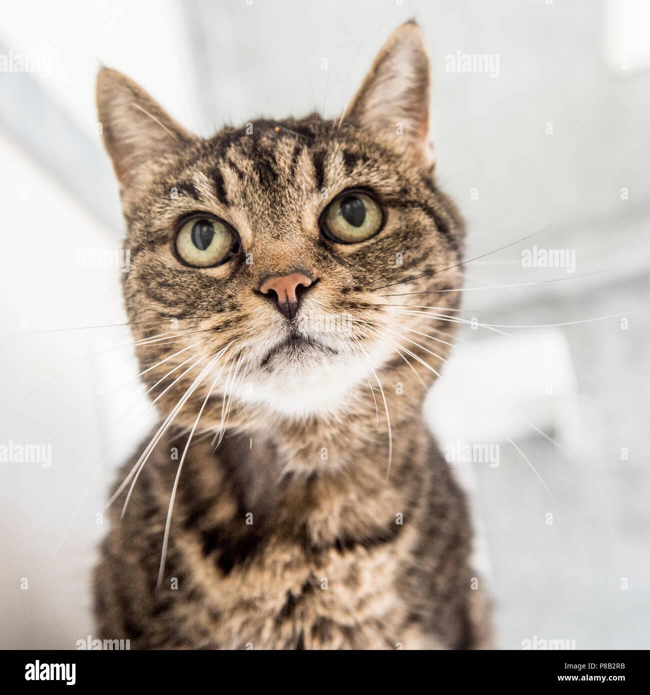 tabby cat - Stock Image