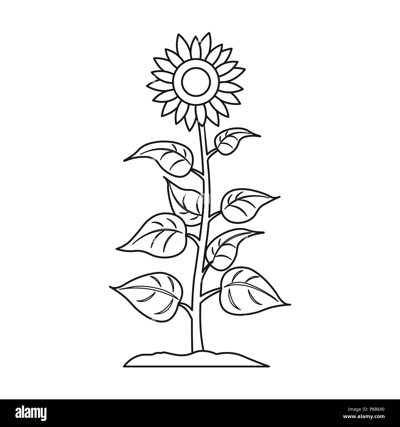 Sunflower Icon In Outline Style Isolated On White Background Plant