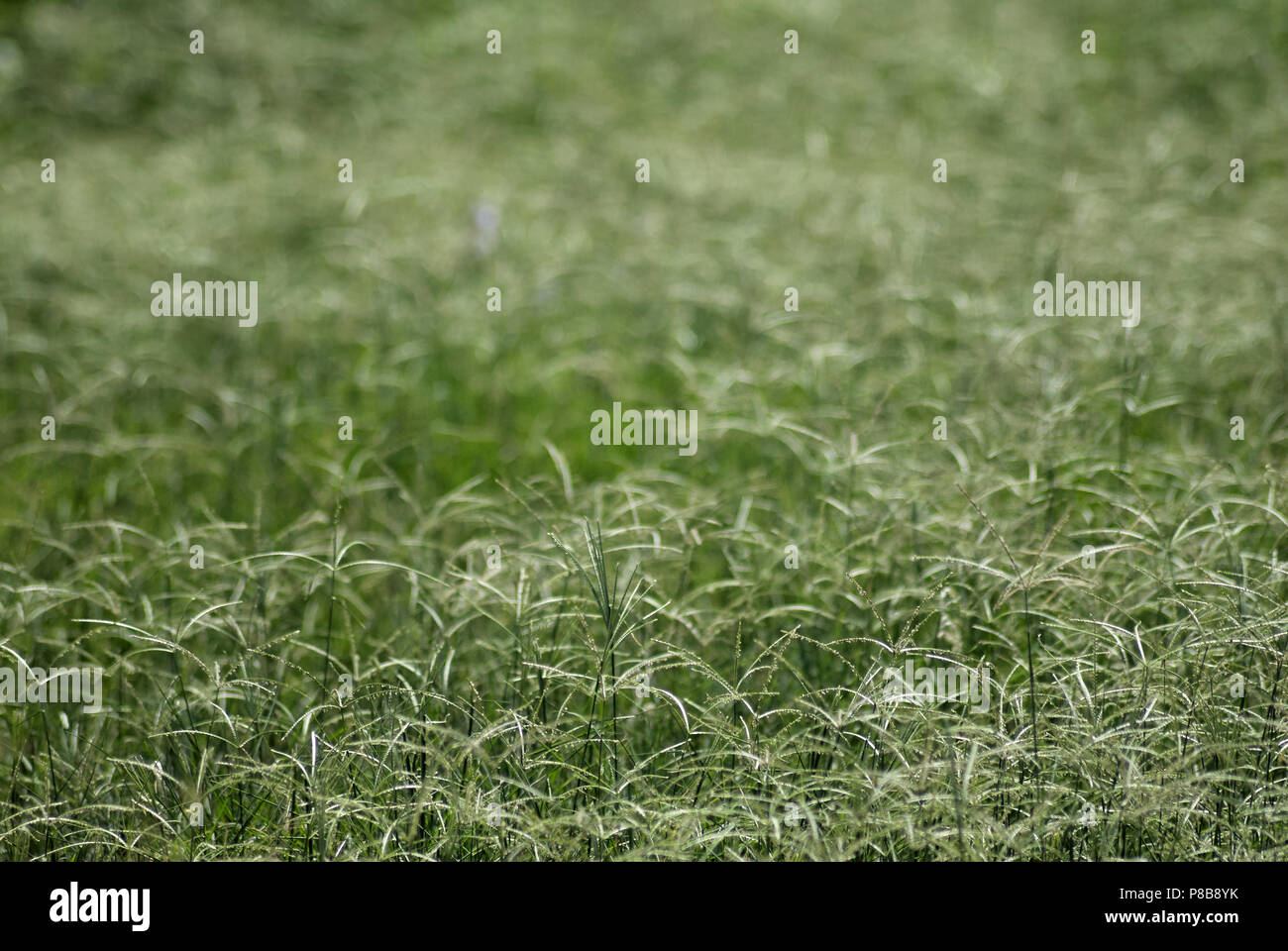 Grass in a landfill - Stock Image