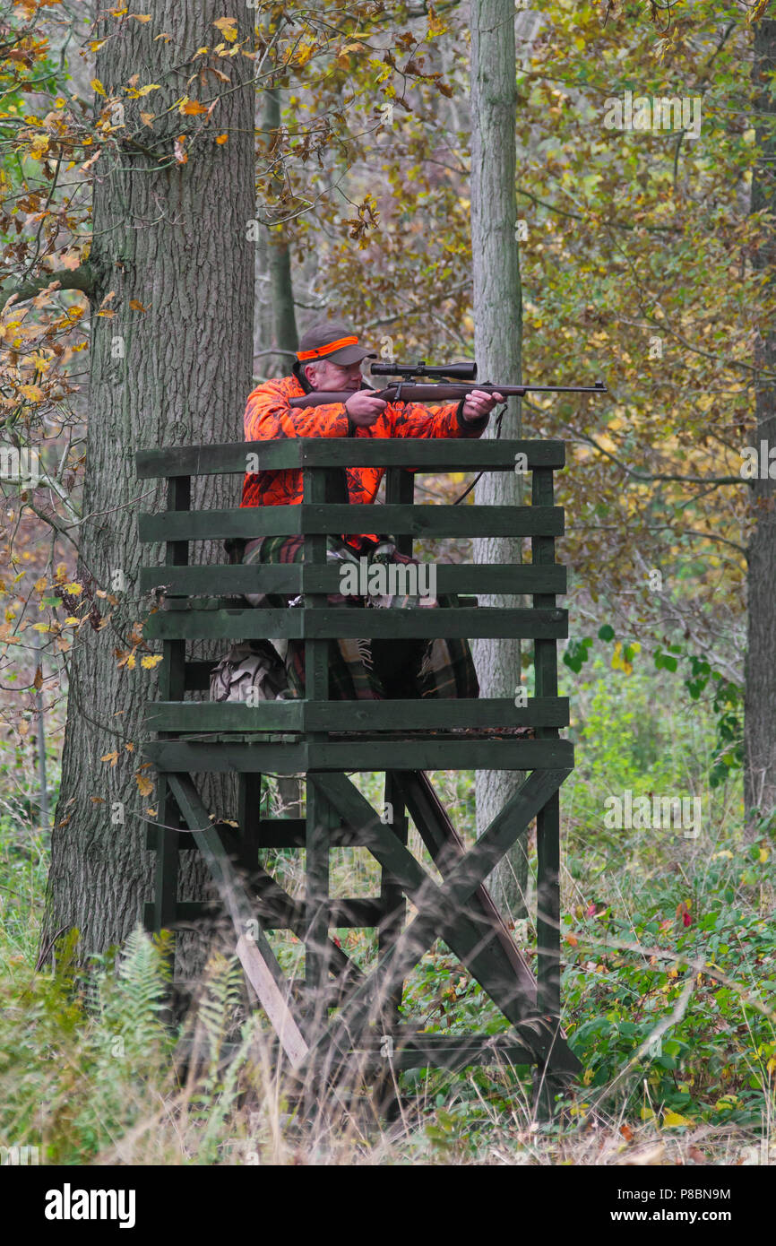 Big game hunter dressed in orange in raised hide aiming and shooting deer in forest during the hunting season in autumn - Stock Image