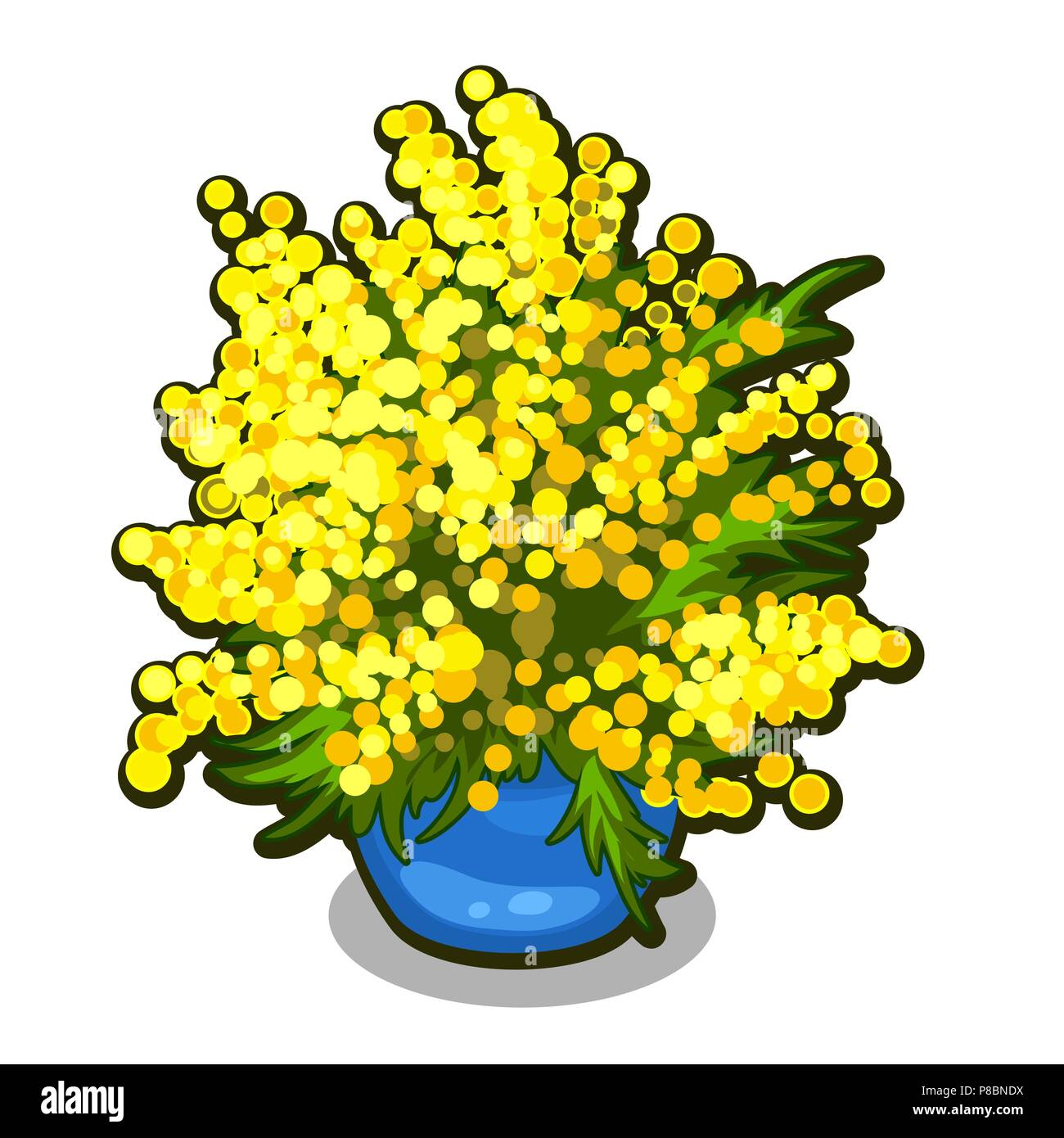 Bouquet Of Mimosa In Blue Flowerpot Spring Flowers Isolated On
