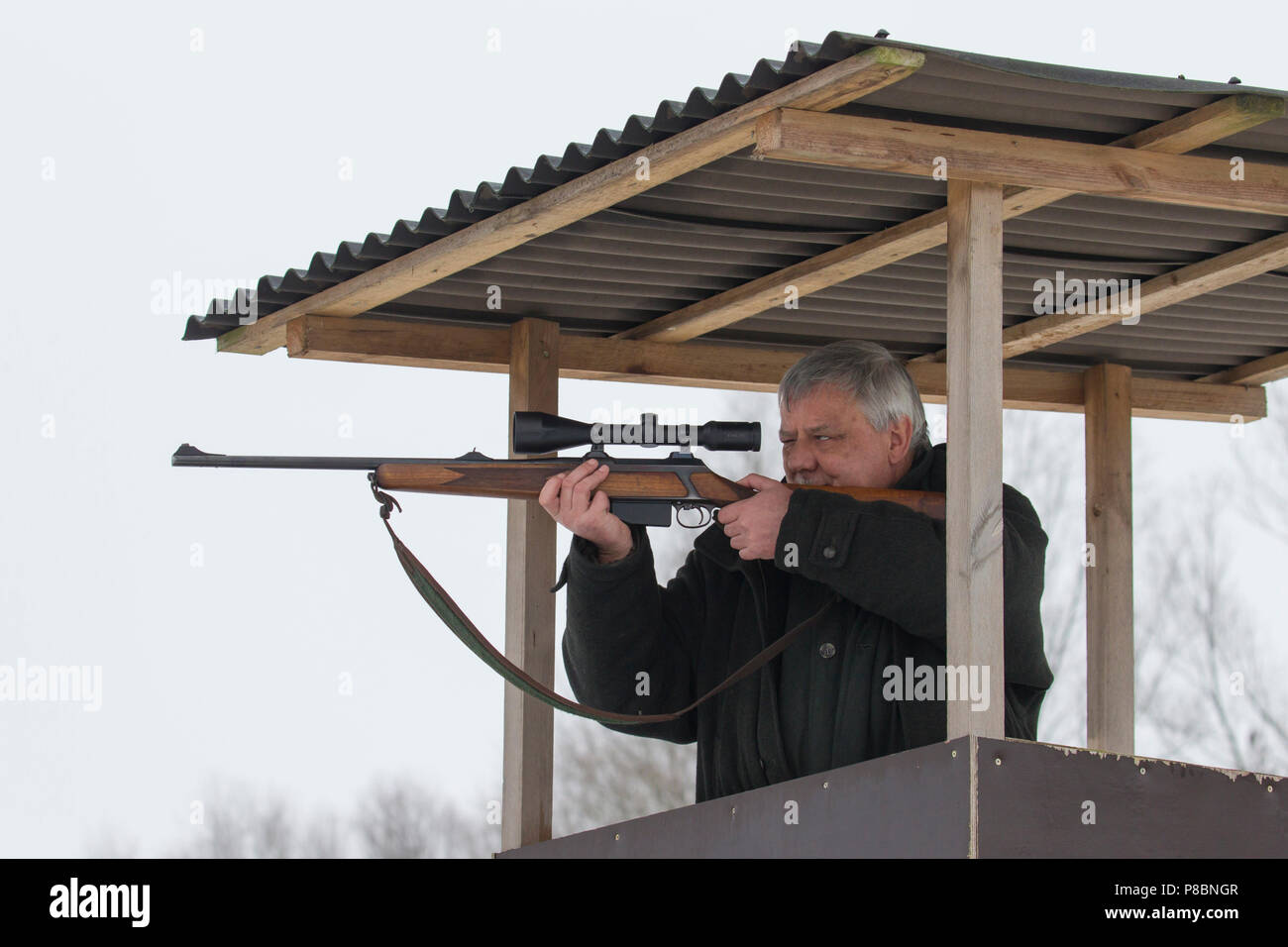 Big game hunter in raised hide aiming and shooting deer in forest during the hunting season - Stock Image