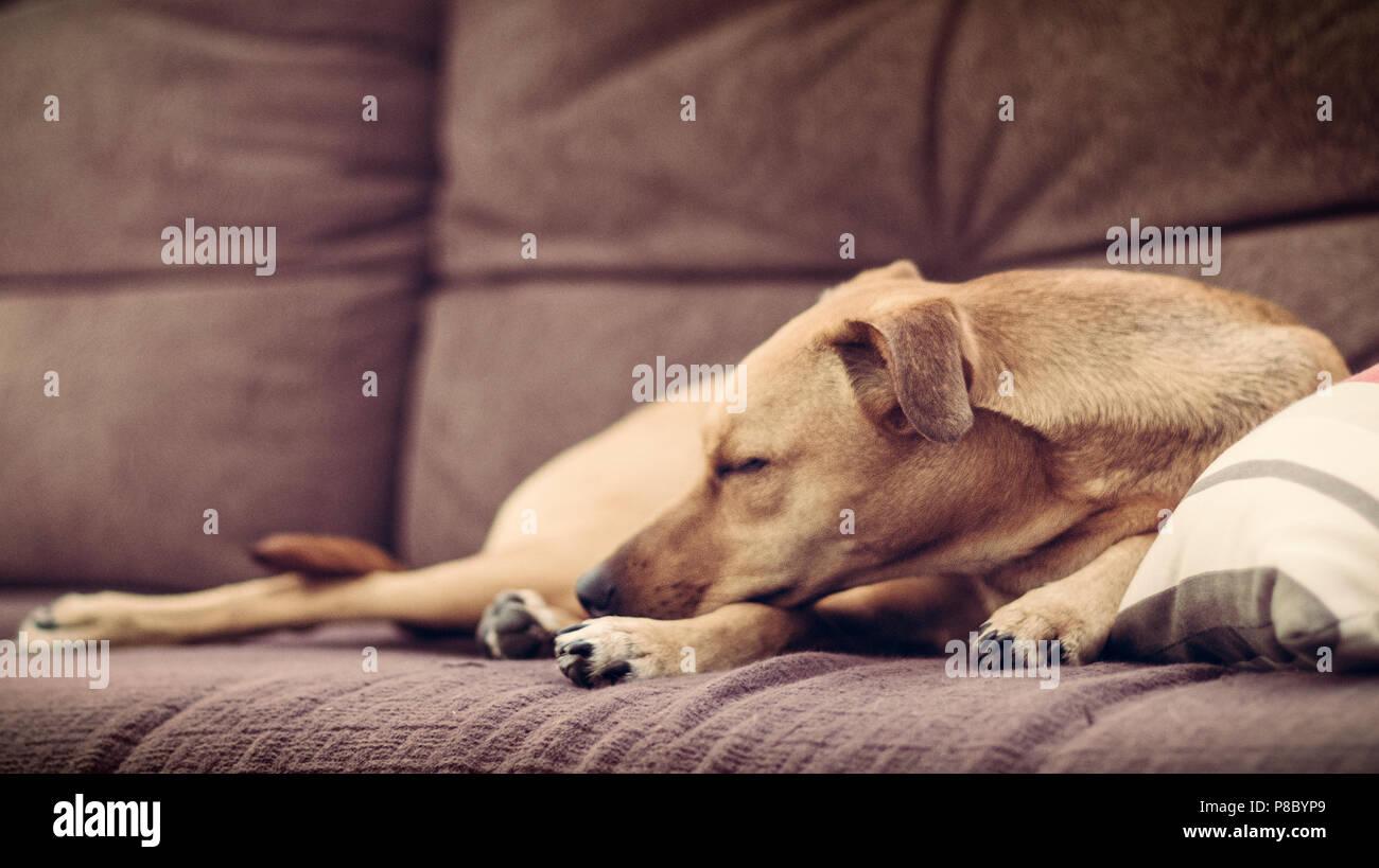 Sleeping - Stock Image