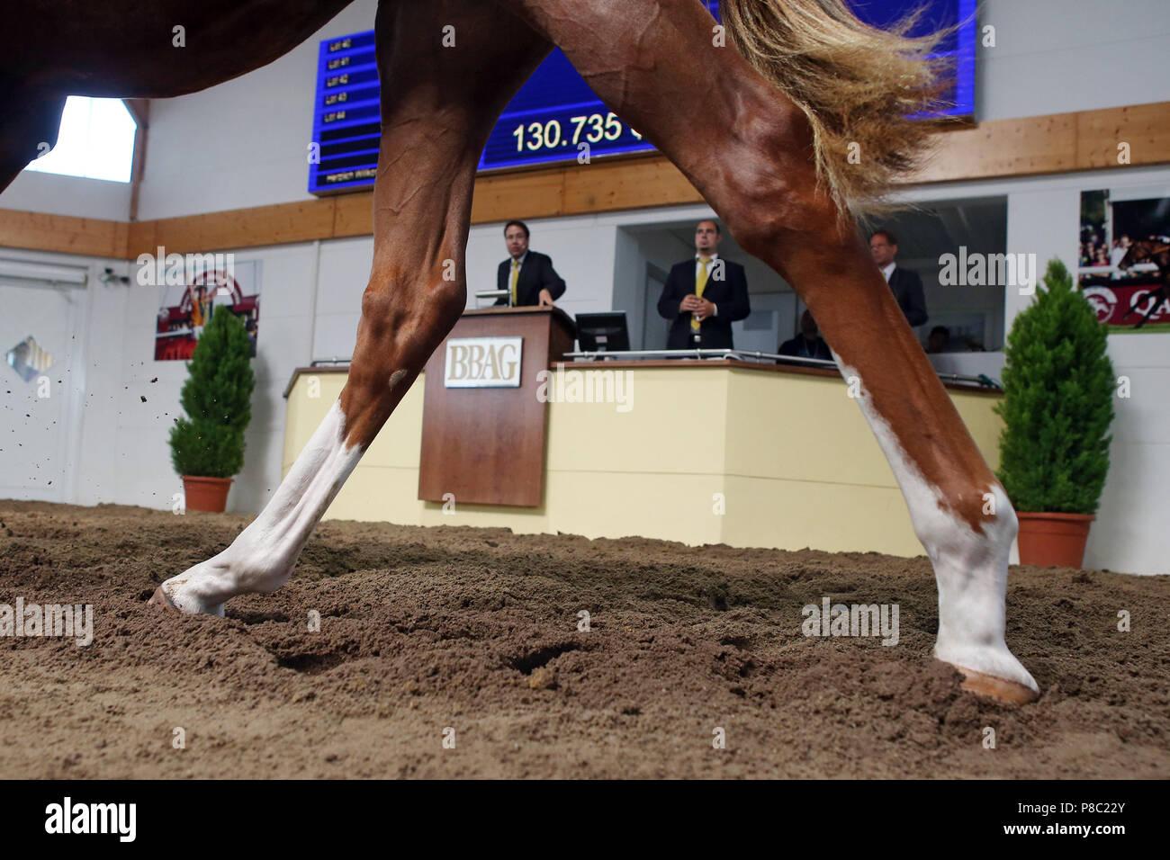 Iffezheim, symbol photo, horse auction - Stock Image