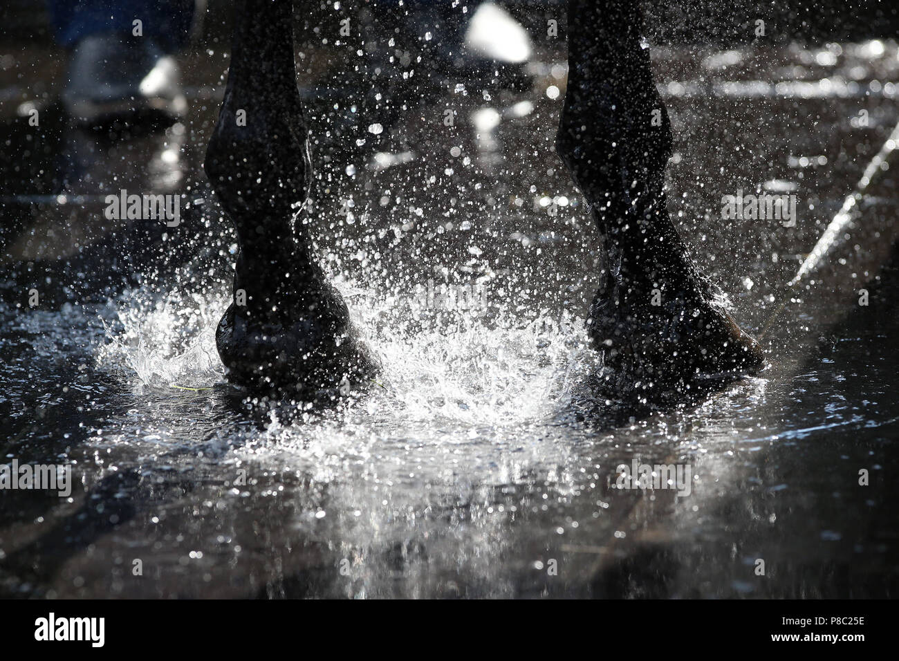 Iffezheim, hooves are in a Pfuetze - Stock Image
