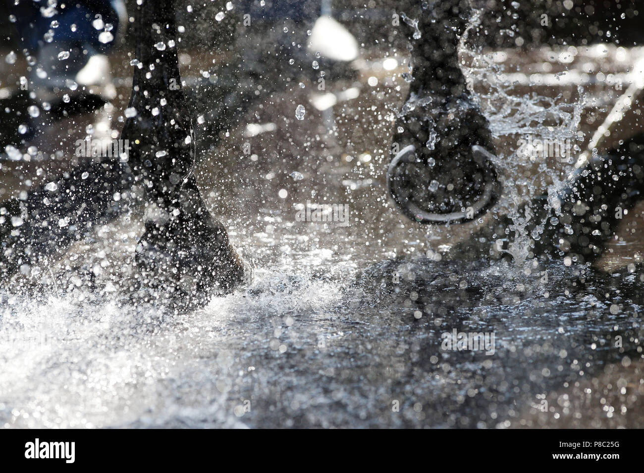Iffezheim, hooves in the water - Stock Image