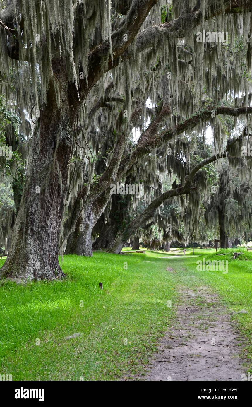 Old oak trees with Spanish Moss on St. Simons Island Georgia, Fort Frederica, national monument, archaeological, historic site, ruins, summer - Stock Image