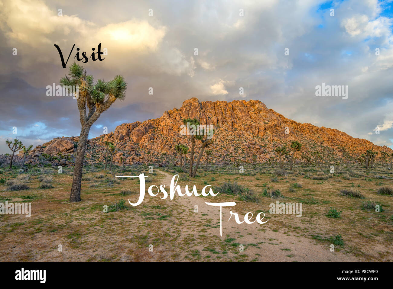 Travel Concept. Photograph of Joshua Tree National Park.  California, USA Stock Photo