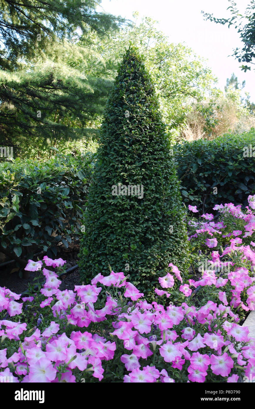 A Tall Ornately Trimmed Green Bush With Flower Beds With Small Pink