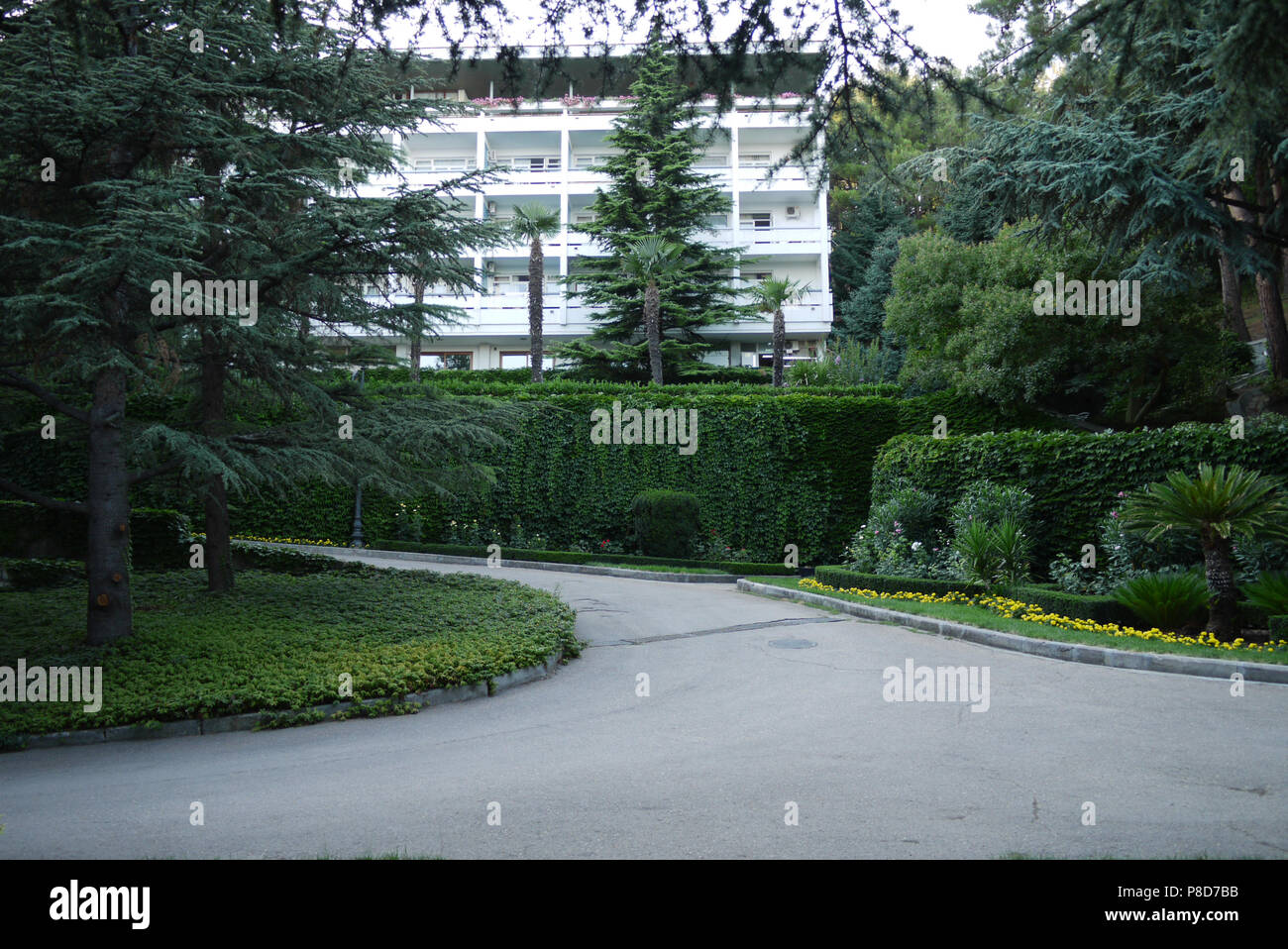 Asphalt road among the green grass of the tall clipped bushes of growing palm trees on the background of a sanatorium building with white walls and ba Stock Photo