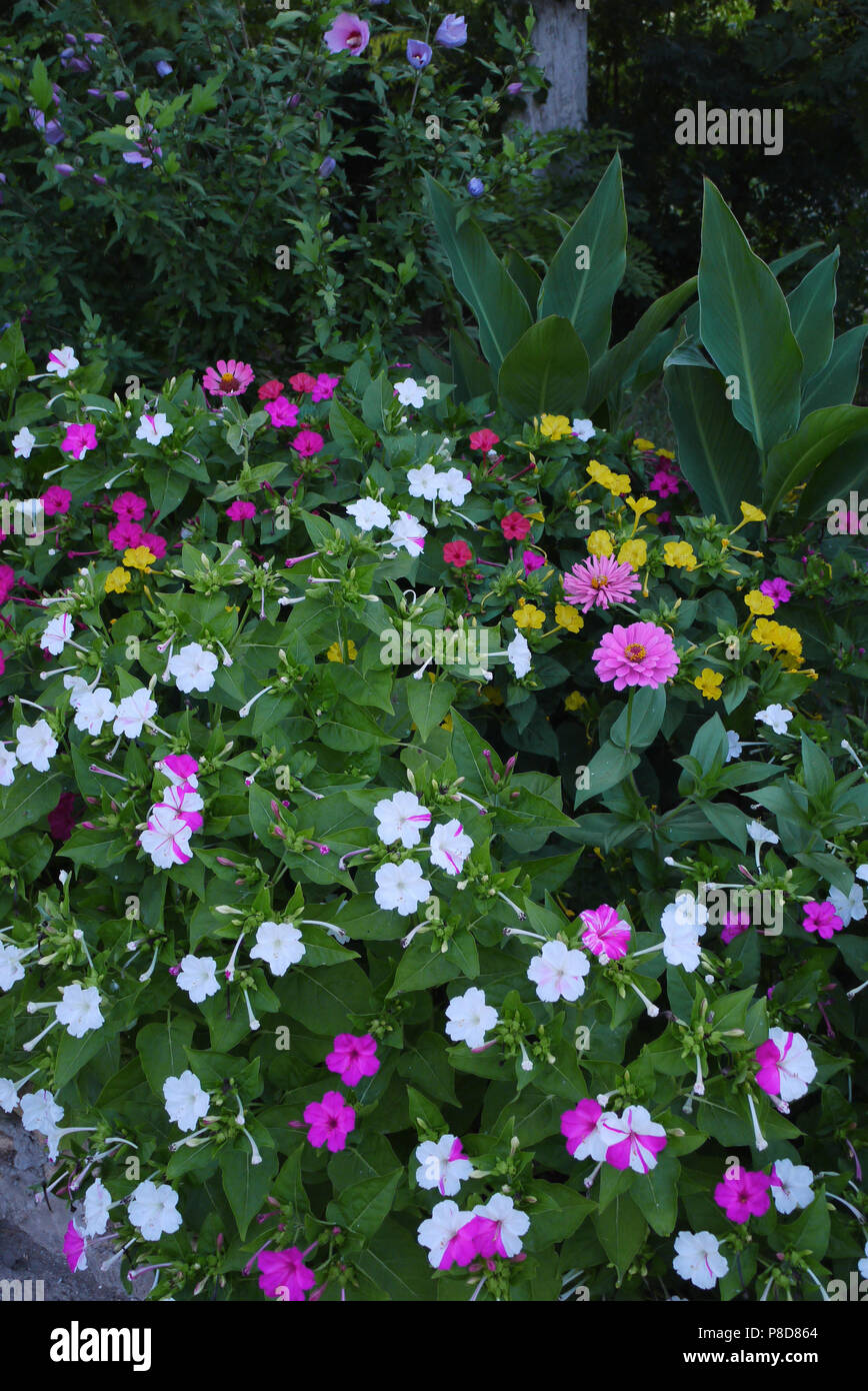 Large Flowerbed With Yellow Red And Pink Flowers On The Background