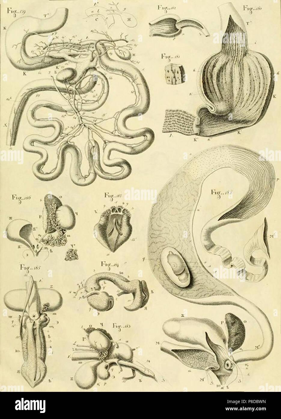 turtle anatomy Stock Photo: 211736385 - Alamy