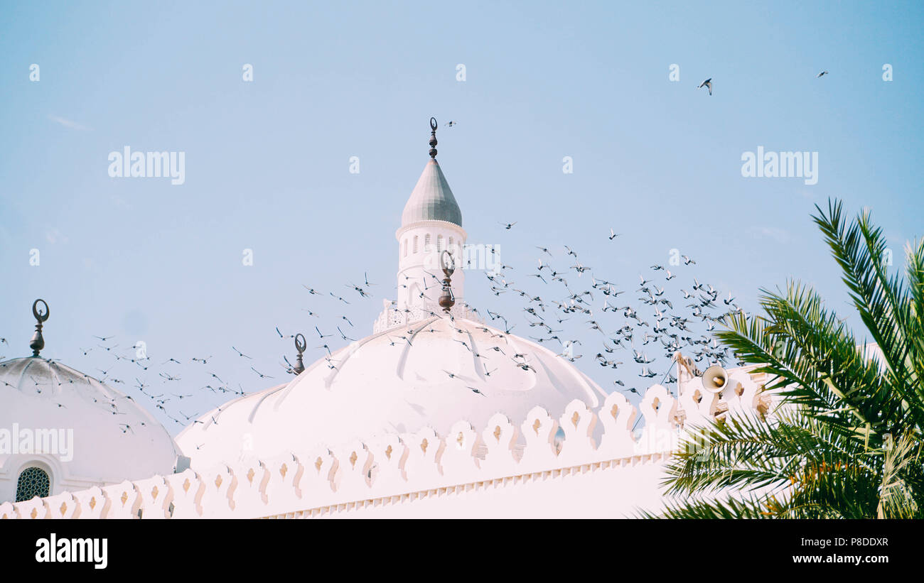 Everyday sight in the dome of the Quba Mosque, birds were flying and perched on the tops of the dome. - Stock Image