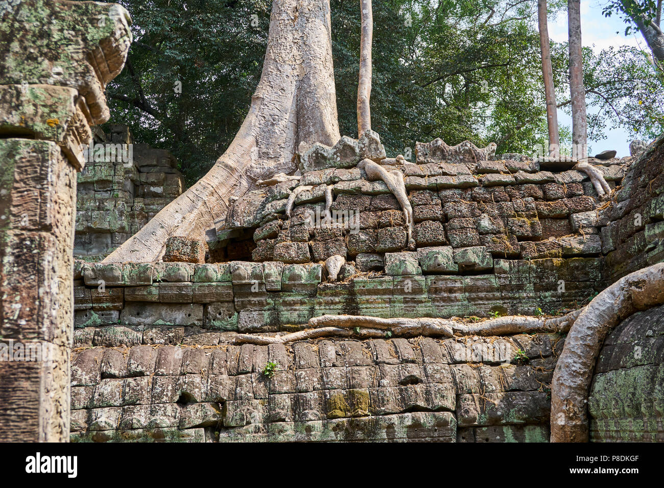 Tree roots growing on Angkor Thom - Stock Image
