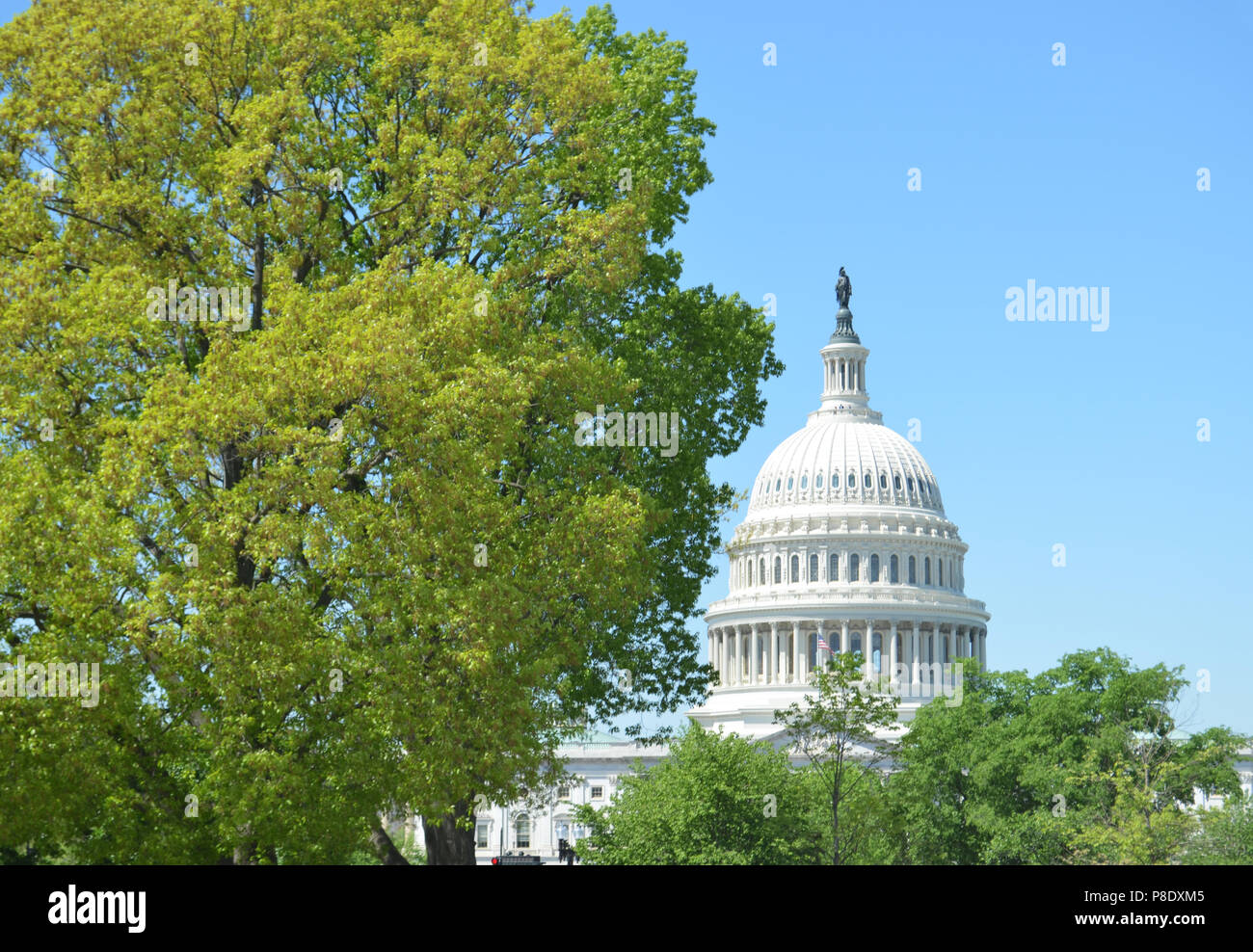 Capitol with Trees Stock Photo