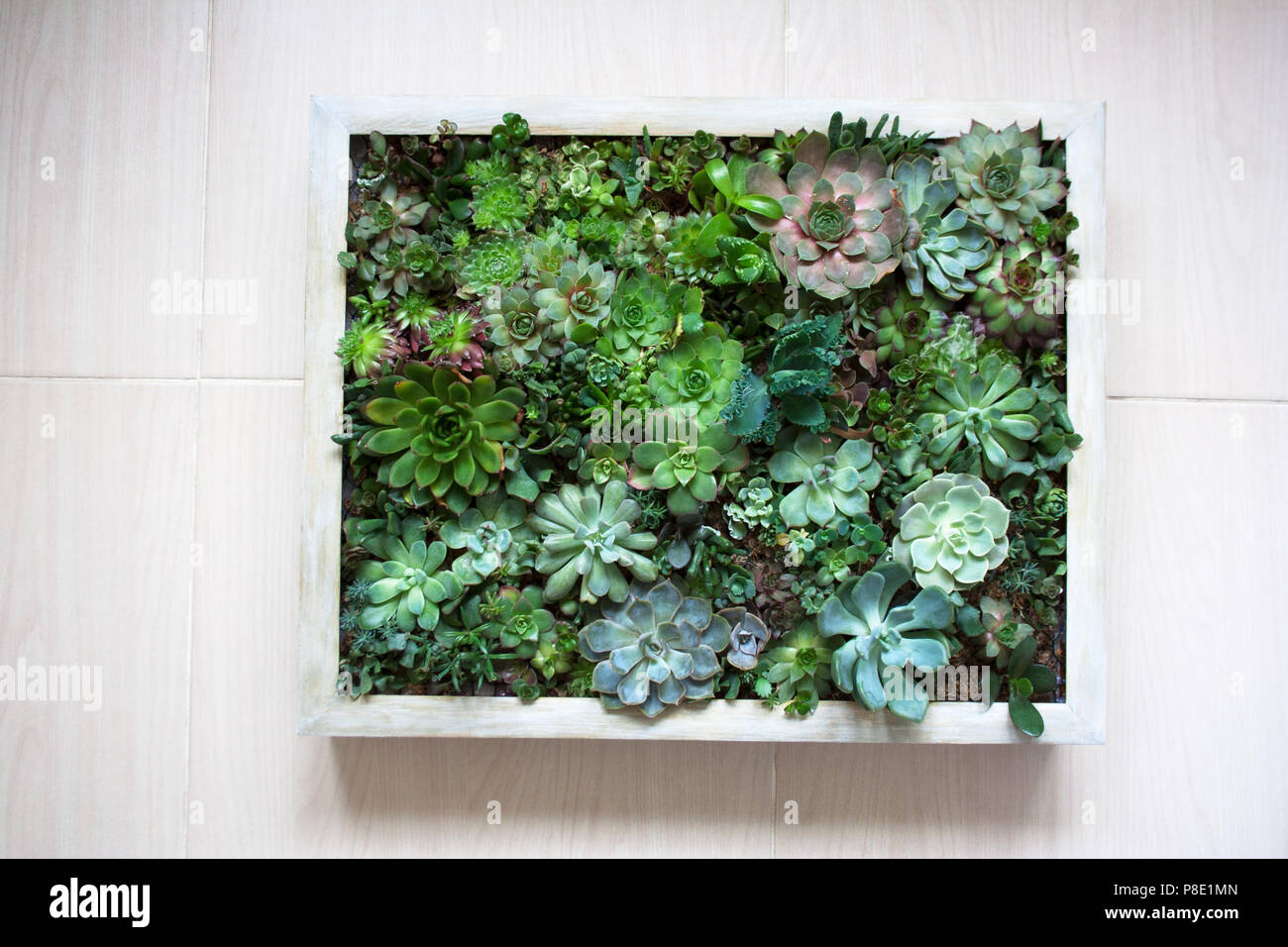 Vertical Succulent Wall Planter In Beige Wooden Frame Stock Photo Alamy