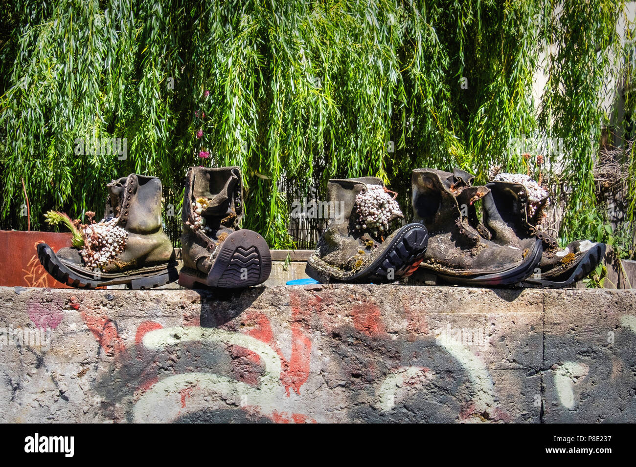 Berlin Prenzlauer Berg. Quirky plant containers. Alpine Sempervivum plants in weathered old boots in garden of Ausland music centre - Stock Image