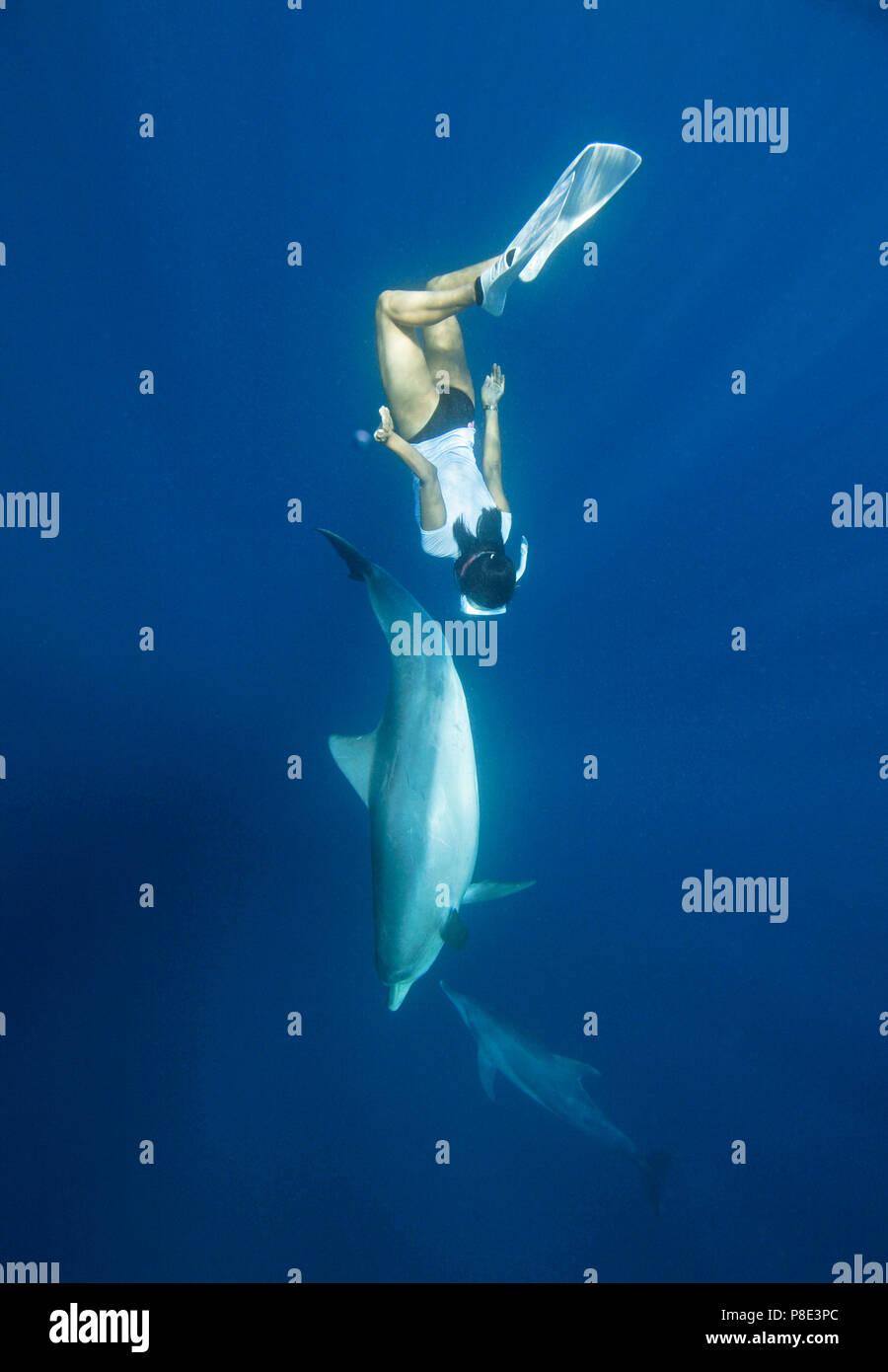 Female snorkeler and Indo-Pacific bottlenose dolphin (Tursiops aduncus), Ogasawara, Japan - Stock Image