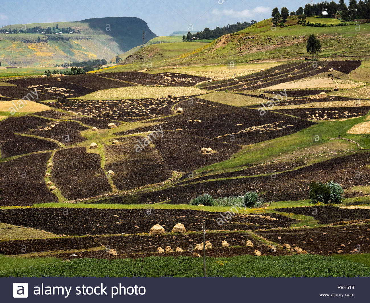 Fields and agriculture in the North, Ethiopia - Stock Image