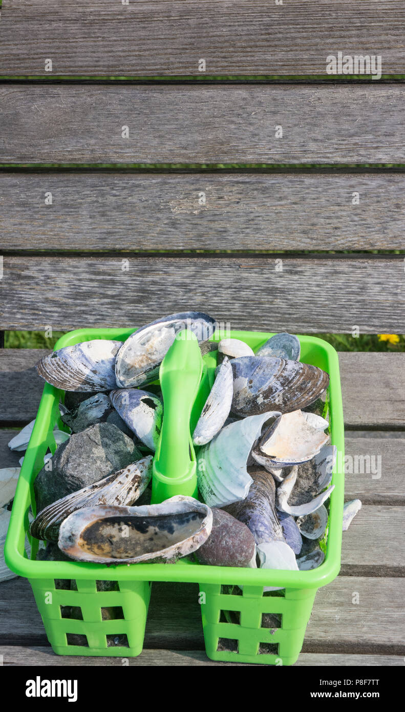 plastic bucket with a collection of a variety of Sea Shells. - Stock Image
