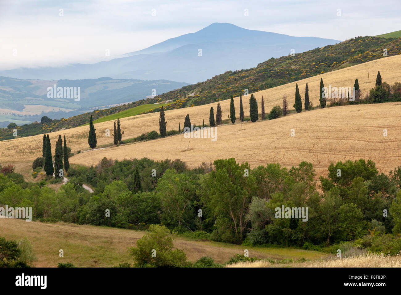 In the vicinity of Montepulciano, a cypress alignment along a lane with Mount Amiata in the background (Tuscany). Aux environs de Montepulciano. - Stock Image