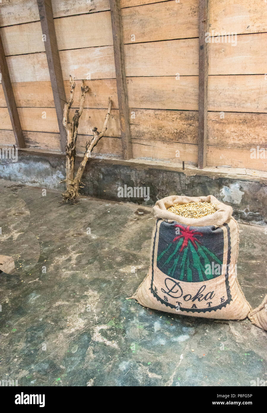 Doka Coffee Plantation Coffee Bag ready for sale and delivery.It is sitting in the wooden warehouse with a branch adding an artistic touch to the pic. - Stock Image