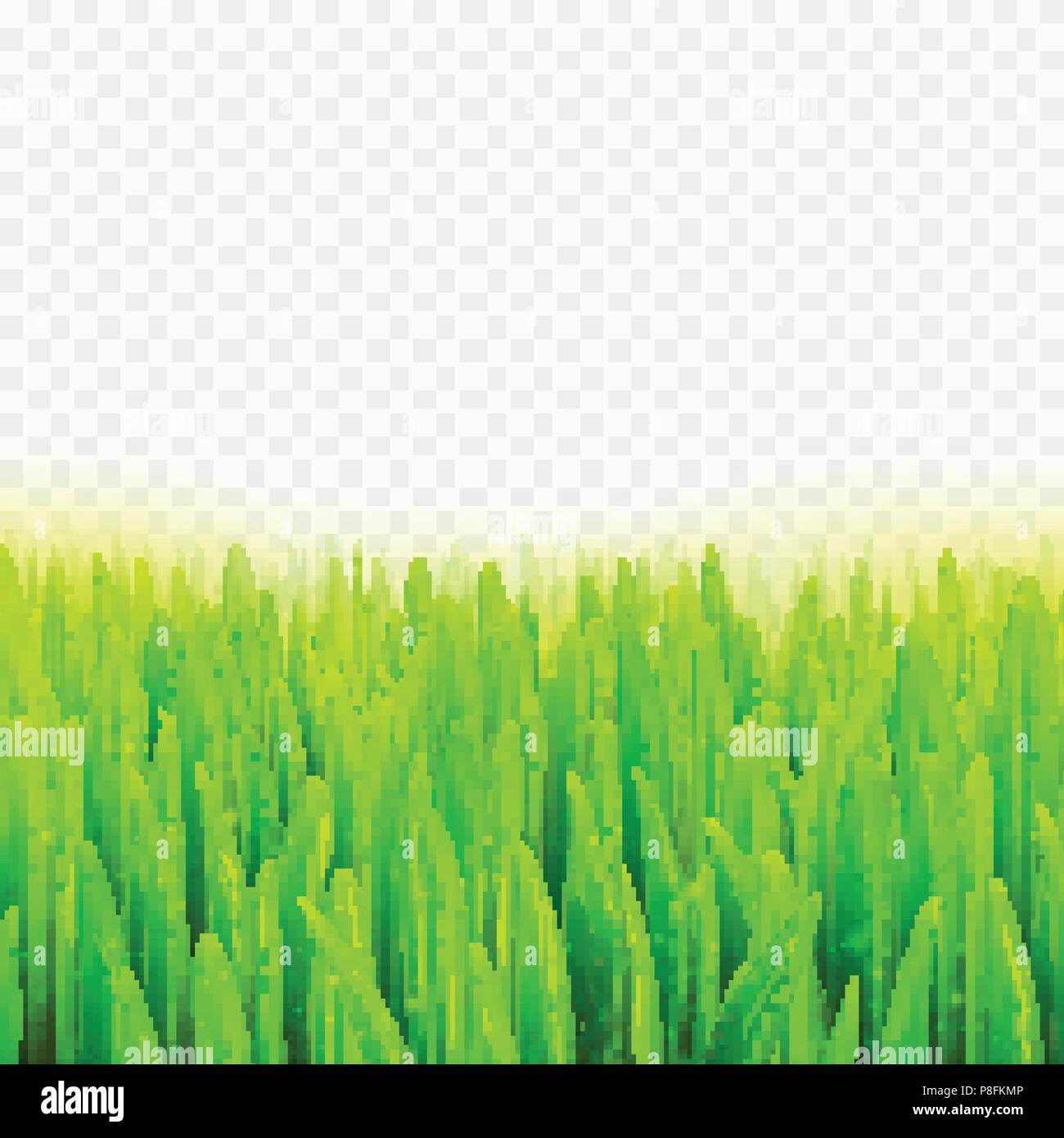 Stock vector illustration realistic macro grass  Summer and