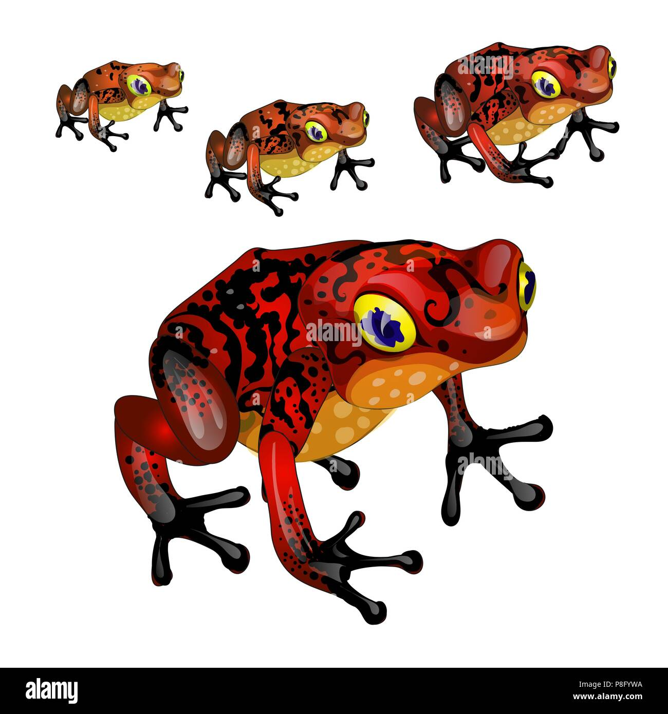 The growth stage of red poisonous frogs isolated on white background. Vector illustration. - Stock Vector