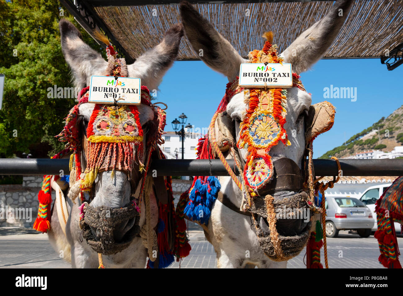 Donkey Taxis. Typical burro taxi, white village Mijas. Málaga province Costa del Sol, Andalusia. Southern Spain Europe - Stock Image