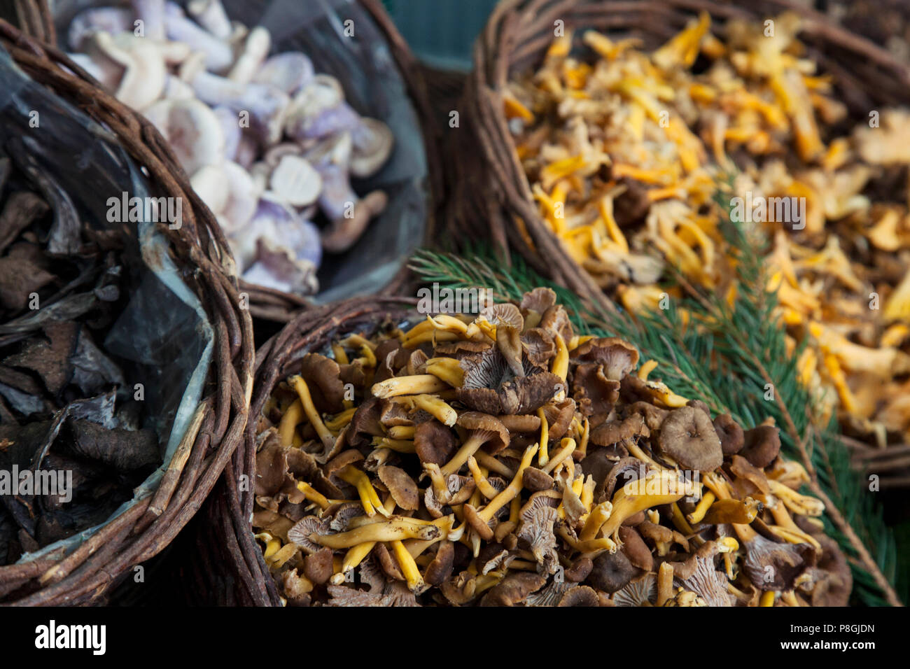 Mixed Mushrooms in wicker baskets on market stall - Stock Image