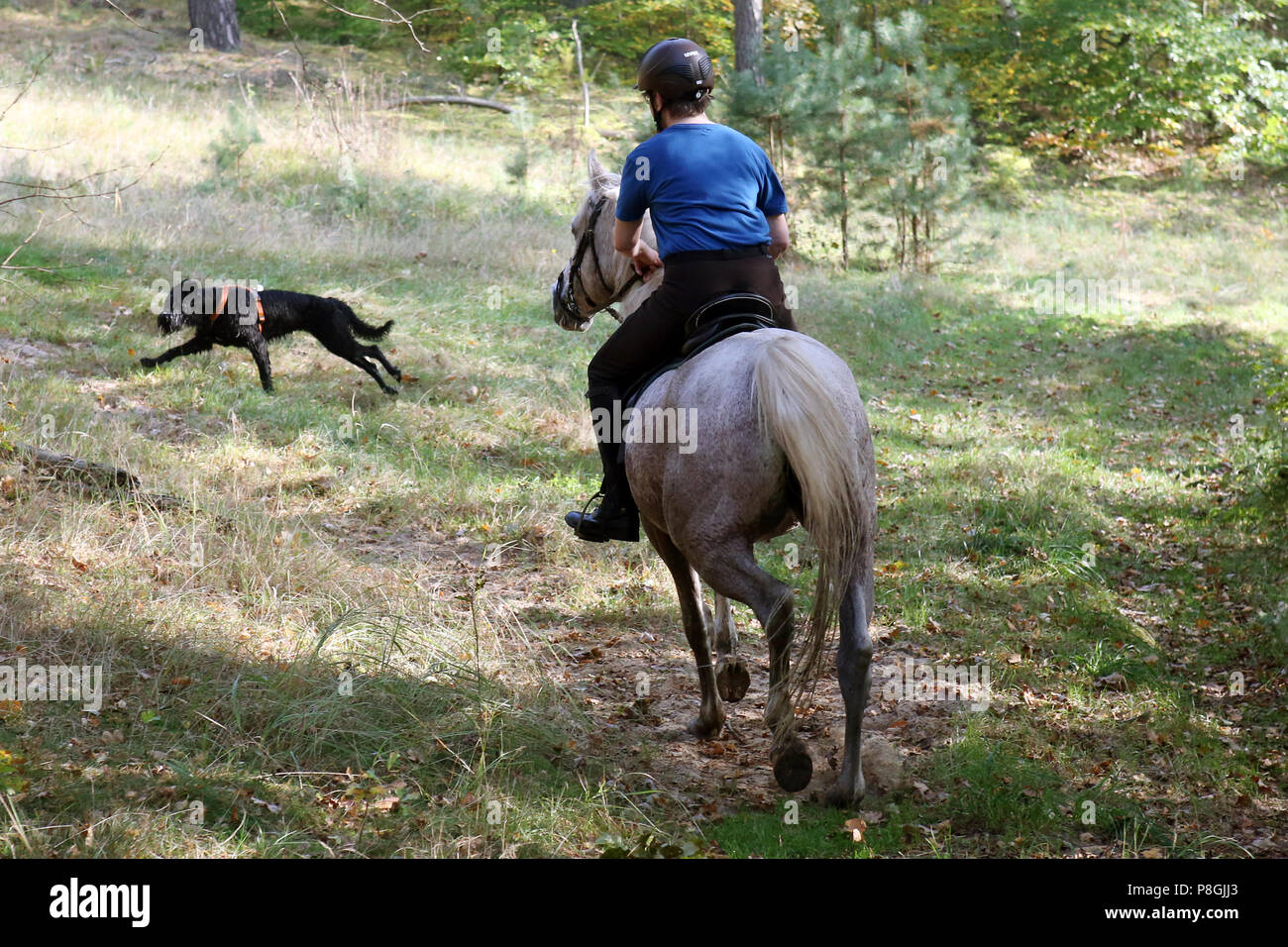 Zernikow, wife meets a free-running dog during a ride in the woods - Stock Image