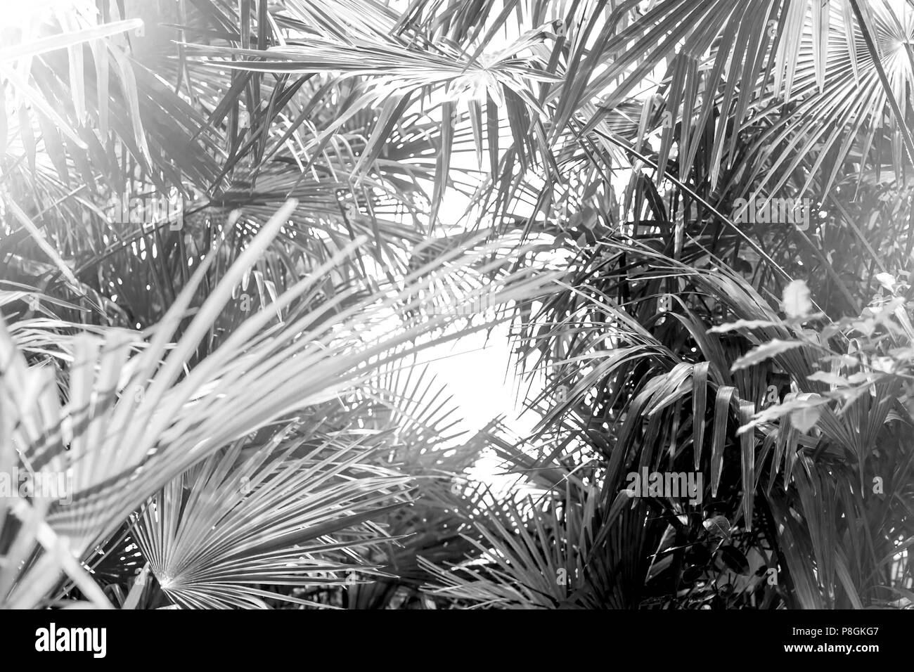 Palm tree leaves background stock image