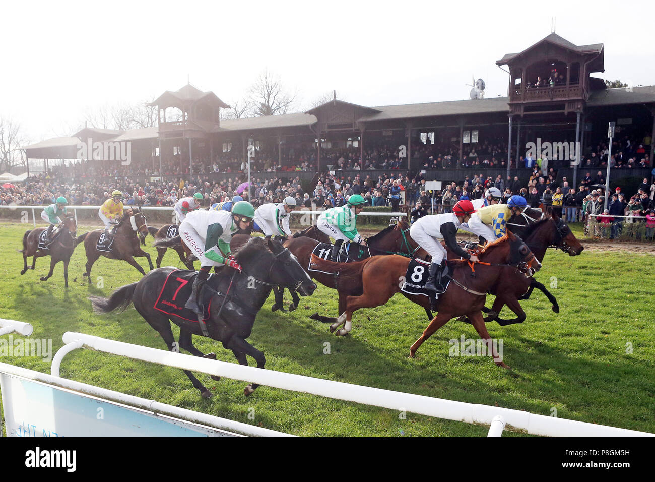 Dresden, horses and jockeys in front of the tribune - Stock Image