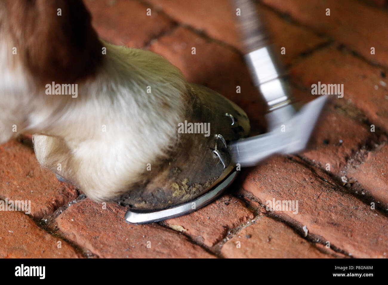 Neustadt (Dosse), overhanging hoof nails are handled with a hammer - Stock Image